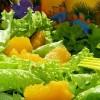 Берегись листового салата