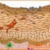 Почему плоский эпителий может появиться в моче?