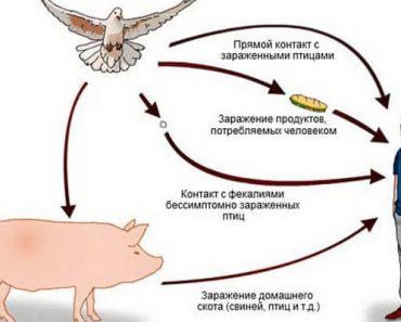 Симптомы и лечение болезни сальмонеллез