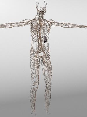 Лимфатическая система - анатомия, схема движения лимфы, диагностика болезней и лечение