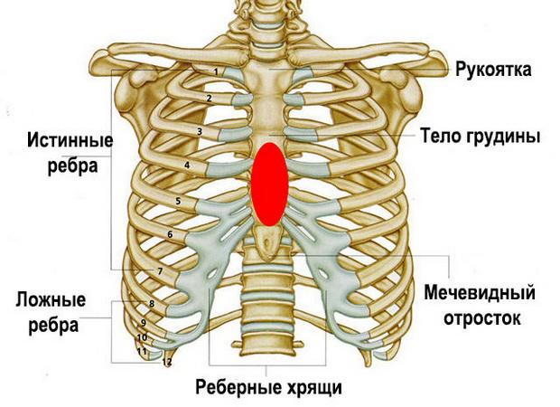 Изображение - Суставы грудной клетки 2105w-6